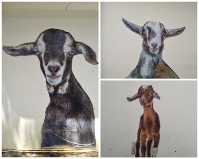 A Mural depicting Goats